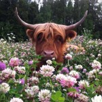 bull in nature weheartit