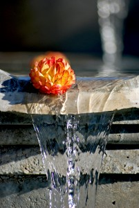Fountain Flower