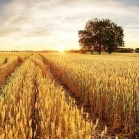 Virgo New Moon: Humble Harvest
