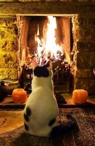cat-by-cozy-fire