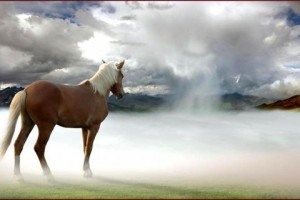 horse in mist